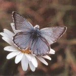 photo of brown butterfly on white flower